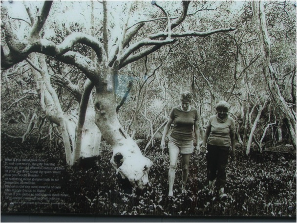"""Oodgeroo Noonuccal and Ellie Durbidge  Digital photography on glass  During the MBRS Public Art Project process Elder Uncle Bob Anderson shared his own stories and special relationship with the inter-tidal zone. Our discussions led to his recollection of this image taken in the Grey Mangrove forest near Moongalba in 1980. The image focuses on two women, Oodgeroo Noonuccal (Kath Walker) — Elder, Poet, Activist and Educator and Ellie Durbidge, third generation resident, founding member of the Stradbroke Island Management Organisation (SIMO) and, like Oodgeroo, mother, grandmother and great-grandmother.  Oodgeroo, now deceased, revealed her passion for her country through her poems such as the 1960 Understand Old One. Her home by the mangroves, Moongalba, was open to all those who came to learn. Ellie Durbidge continues to pursue her passion for observing and protecting North Stradbroke Island. My thanks are extended to Ellie Durbidge and the descendants of Oodgeroo Noonuccal for giving me permission to exhibit this image. The photo was published in the North Stradbroke Island """"jellyfish"""" book written by Mrs Ellie Durbidge and Jeanette Covacevish. Visitors to the North Stradbroke Island Museum will be able to view the original photo, learn about the endeavours of SIMO, and view selections of the Oodgeroo collection currently being archived by members of her family."""